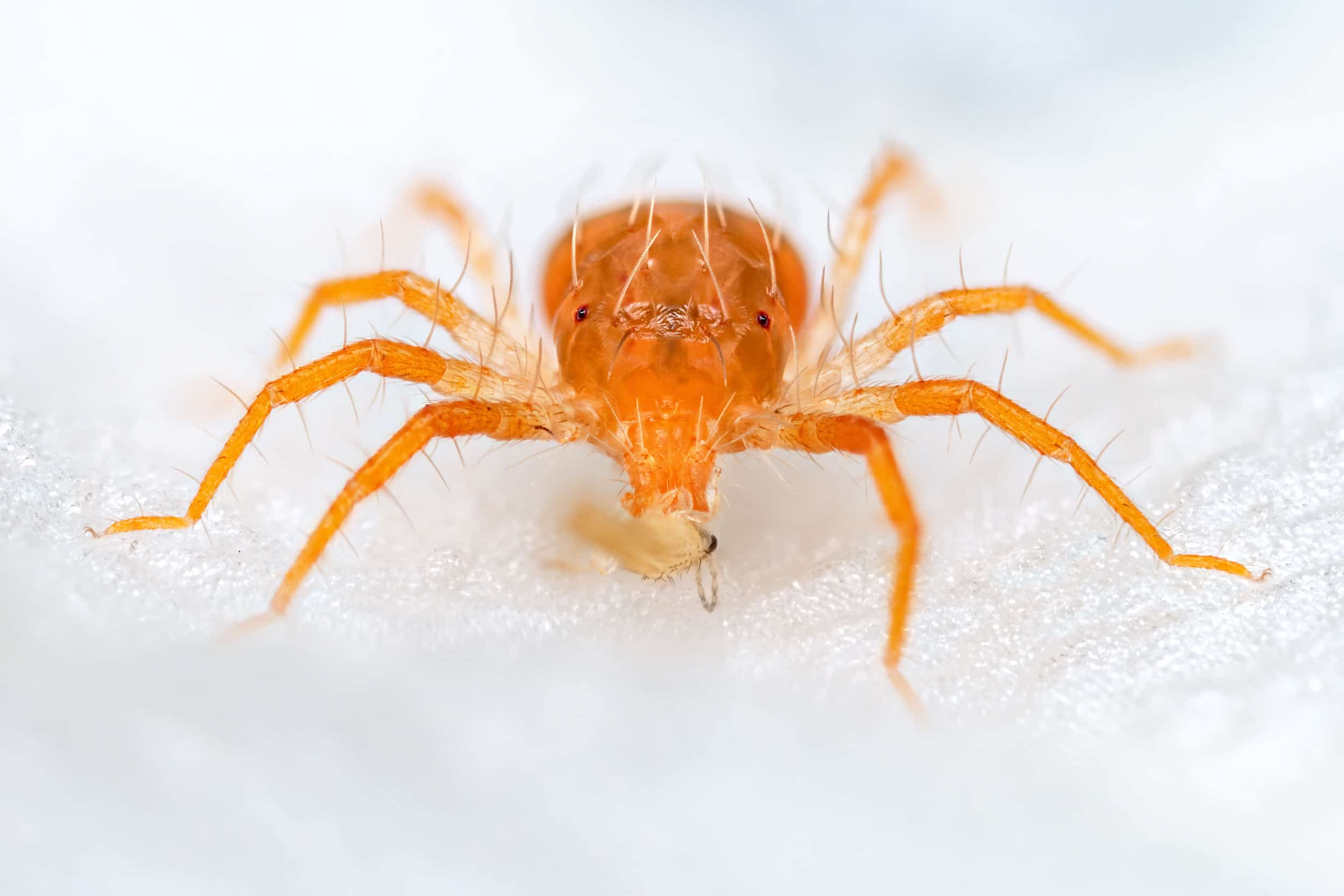 Mite photographed in Lucerne, Switzerland